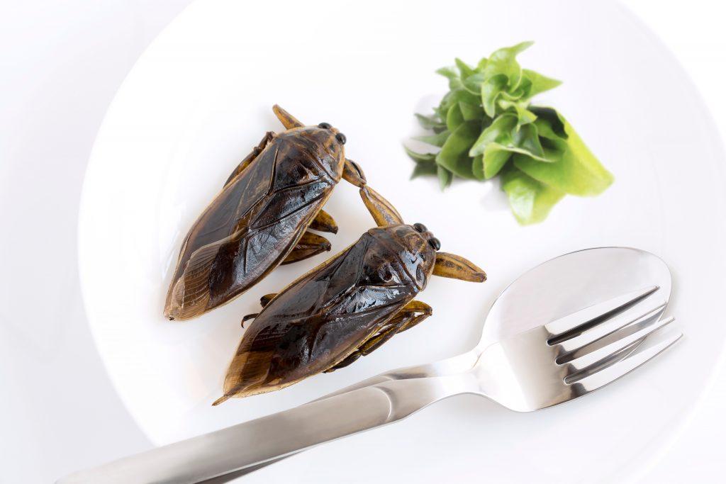 böcek atıştırmalıkları
