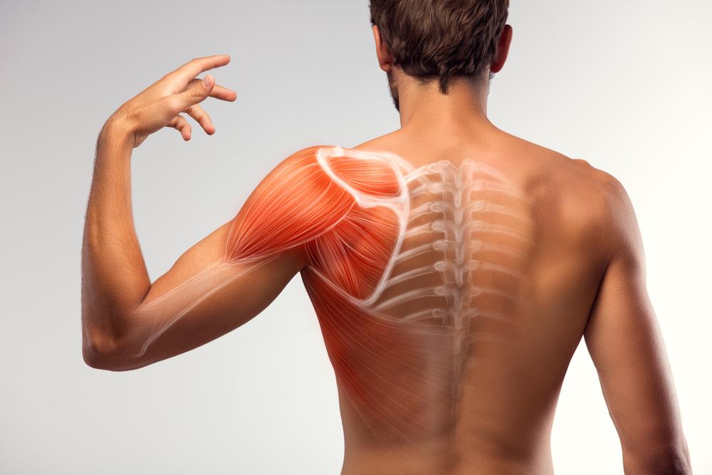 press-hareketi-genis-omuz-kaslar